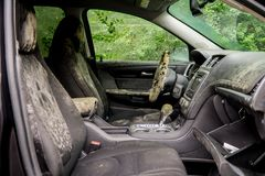 Mold growing inside a flooded car after Hurricane Harvey. In Houston Texas stock photo