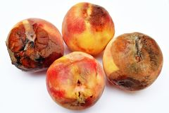 Mold growing on old peach, stock photos