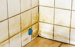 Mold growing on shower tiles in bathroom. At home royalty free stock images