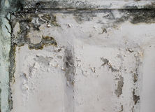 Mold. Growth and water stains on the ceiling of an abandoned house stock images