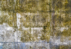 Mold. Growth and water stains on the ceiling of an abandoned house royalty free stock photos