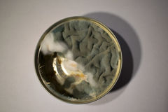 Mold. I found this in my fridge, it was supposed to be tuna pate stock photography