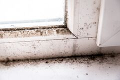Free Mold In The Corner Of The Window Royalty Free Stock Photography - 179778937