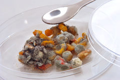 Mold infested vegetables Royalty Free Stock Photography
