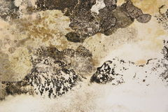 Mold on interior wall of old house Stock Images