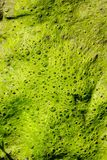 Mold, moss or bacterium made natural structure. As a green texture pattern background royalty free stock photo