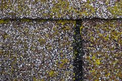 Mold/Moss Damage on House Roof Shingles Stock Images