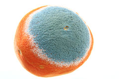 Mold on an orange Stock Images