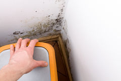 Mold problem in home. Mold and fungus behind rubbish bin on wall stock photography