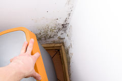 Mold problem in home. Mold and fungus behind rubbish bin on wall stock photo