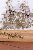 Mold problem in home. Mold and moisture buildup on corner wall of a house stock photography