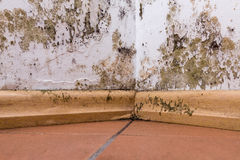 Mold problem in home. Mold and moisture buildup on corner wall of a house stock images