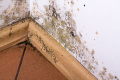 Mold problem in home. Mold and moisture buildup on corner wall of a house stock photo