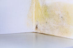Mold problem in home. Persistent mold on corner in room wall stock photos