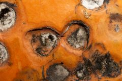 Mold on the pumpkin Stock Images