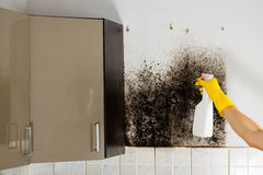 Mould removal. Stock Images