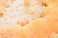 Mold in rice Stock Photo