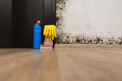Mold in the room royalty free stock photography