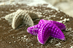 Mold in the shape of a starfish Royalty Free Stock Photo