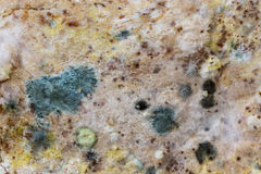 Mold spores on slices bread. Stock Photography