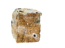 Mold spores on slices bread. Royalty Free Stock Photos