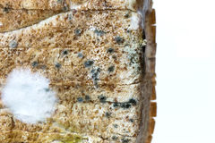 Mold spores on slices bread. Royalty Free Stock Photography