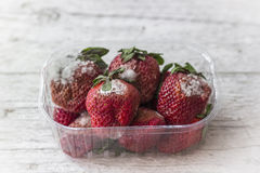 Mold Strawberry. Strawberry with mold fungus in transparent plastic box Royalty Free Stock Photo