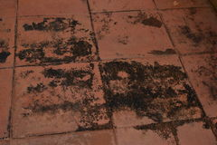 Mold. Tile is not responsible for external use, thus mold and dirty Royalty Free Stock Photos
