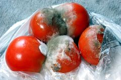 Mold tomatoes Royalty Free Stock Image