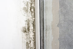 Mold on the wall Royalty Free Stock Images