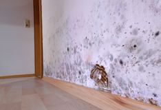 Mold, wall, brown cellar sponge, damage. Old house with mold on a wall royalty free stock photos