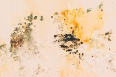 Mold on the wall, close up. Grunge moldy walls. Fungus, bacteria on color surface. Cracks on the walls moldy. Old wall royalty free stock photo