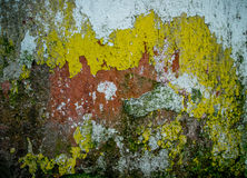 Mold Wall. In multiple colors close up Stock Photography