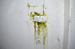 Mold on Wall with Switches Royalty Free Stock Photos