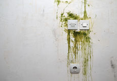 Mold on Wall with Switches and Plug Stock Photography