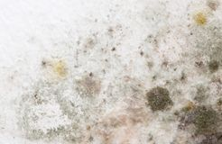 Mold on the white wall in the house.  stock image