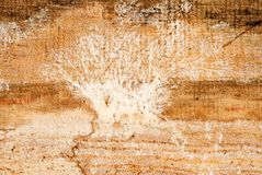 Mold on a wooden board royalty free stock photo
