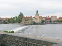 Moldau-Fluss und -seemöwen lizenzfreie stockfotos