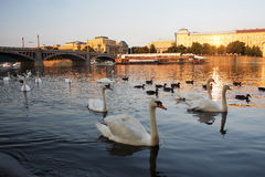 The Moldau river in Prague Stock Image
