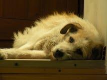 Moldavien Chisinau hund Royaltyfri Fotografi