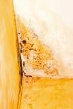 Molde Foto de archivo
