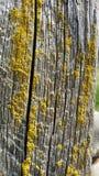 Molde amarelo Imagem de Stock