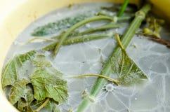 Molde branco nos pratos com vegetais Fotografia de Stock Royalty Free