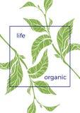 Molde com ramos e as folhas verdes Ilustração do vetor Foto de Stock Royalty Free