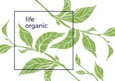Molde com ramos e as folhas verdes Ilustração do vetor Imagens de Stock