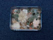 Molde crescido no alimento no prato de vidro retangular - imagem imagem de stock royalty free