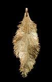 Molde de folha do Spiraea Fotografia de Stock