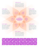 Molde de Infographic da escola Imagens de Stock