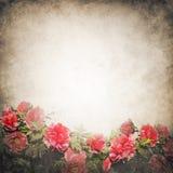 Molde do fundo do Grunge com flores da peônia Imagens de Stock Royalty Free