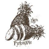 Molde do projeto do logotipo do vetor do abacaxi fruto ou ilustração royalty free